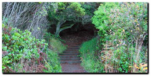 oregon coast hiking trails